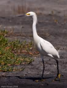 Black and White Water Bird Florida