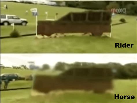 horse sees ihearthorses jump fascinating truly distance meters away meter loses focus