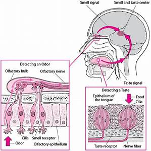 Overview Of Smell And Taste Disorders