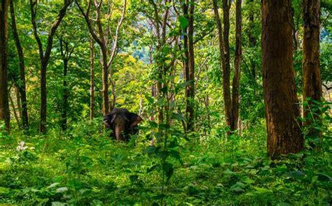 amazing jungle camps  india   visit