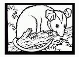 Possum Coloring Pages Printable Colouring Getcoloringpages Mask Tree sketch template