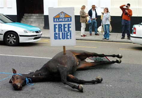 horse dead beating glue