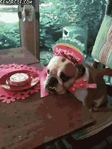 Sad Happy Birthday GIF by Cheezburger - Find & Share on GIPHY