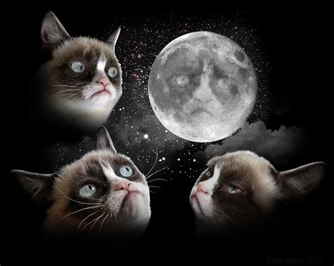 Three Wolf Moon Meme - three cat moon three wolf moon know your meme
