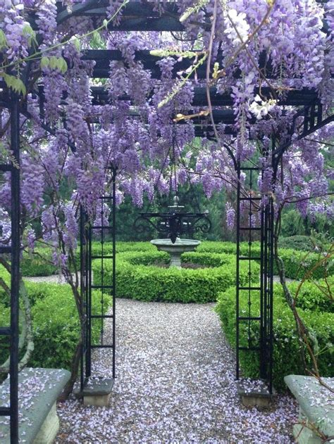 wisteria trellis ideas wisteria arbor plantsville pines ct flowers wisteria pinterest wisteria arbor