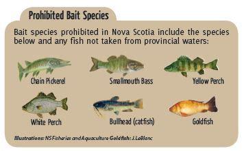 invasive fish  prohibited bait species landowner