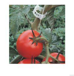 plant clip   price  india