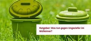 Was Tun Gegen Maden Im Mülleimer : maden und fruchtfliegen im m lleimer resorti blog ~ A.2002-acura-tl-radio.info Haus und Dekorationen