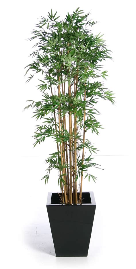 bamboo plants bamboo artifiacl plants bamboo craft photo