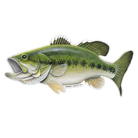 Images Of Bass Fish Largemouth Bass Fish Decals Stickers Saber Tooth Co