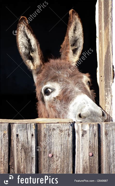 animals donkey   stable stock picture