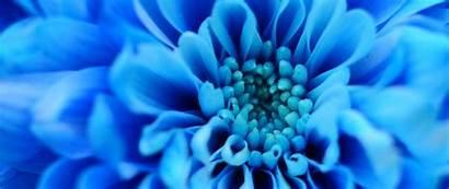 Flower Petals Dual Background 1080p Macro Wide