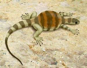 Extinct Reptile Eunotosaurus Reveals How Turtles Got Their