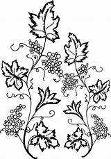 Coloring Ivy Leaf Grape Pages Lego Santa Flower Printable Print Sheets Nice Dog Wecoloringpage Box sketch template
