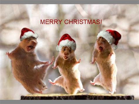 funny christmas animal pics merry christmas merry christmas funny christmas animals