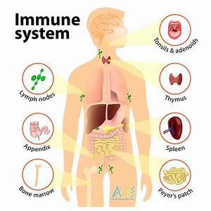 Strengthen Immune System Functions Naturally