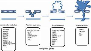 Figure 1 From The Molecular Pathogenesis Of Colorectal