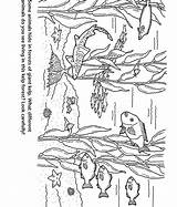 Coloring Forest Kelp Aquarium Bay Monterey Colouring Template Easy Animal Jungle Marine Simple Tree Sketch Forests Montereybayaquarium Nature sketch template