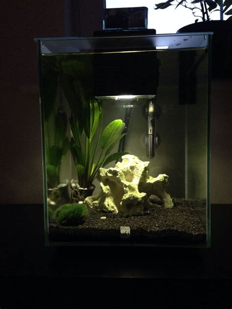 Fluval Chi Aquascape by New Set Up For Fluval Chi Aquascape Aquarium Aqua Water