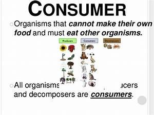 Consumers Organisms