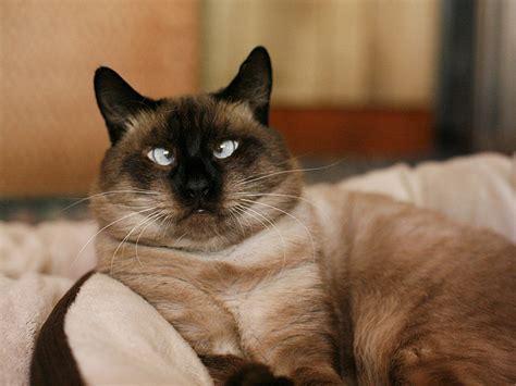 Cute Crosseyed Cats  Eye Opening Info  Eye Opening Info