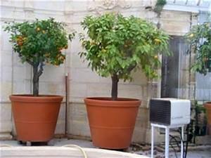 Prix D Un Citronnier : grands pots pour arbustes ~ Premium-room.com Idées de Décoration