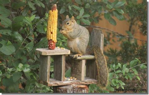 squirrel feeder plans     squirrel feeder