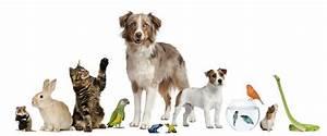 Pflegeleichte Haustiere Wohnung : mieten und kaufen haustiere in mietwohnungen ~ Yasmunasinghe.com Haus und Dekorationen