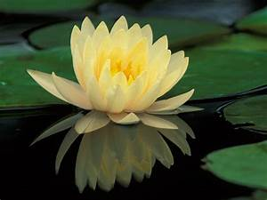Ladyjskincare  Beauty Obsession Of The Day  Water Lilies