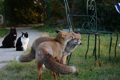 wo sich fuchs und katze gute nacht sagen agriturismo