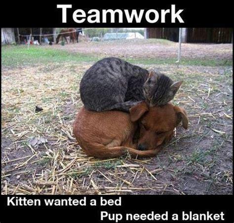 images  teamwork  pinterest