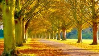 10 Most Beautiful ...Beautiful Nature Scenery Wallpapers