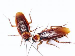 Kakerlaken ähnliche Insekten : entwicklung der kakerlake ~ Articles-book.com Haus und Dekorationen