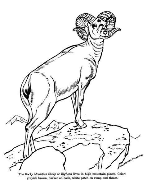 wild animal coloring pages animal identification sheets