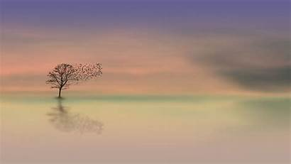 Lonely Dawn Tree 1080p Minimalism Horizon Background