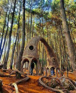 romantisnya hutan pinus pengger de jogja adventure