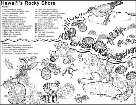 hawaii coloring pages  printables  getcoloringscom  printable colorings pages