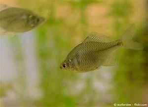 Karpfen Im Gartenteich : welche fische f r den gartenteich garten hausxxl ~ Lizthompson.info Haus und Dekorationen