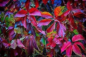 Schöne Herbstbilder Kostenlos : gru karte weinlaub herbstbilder gl ckw nsche gl ckw nsche ~ A.2002-acura-tl-radio.info Haus und Dekorationen
