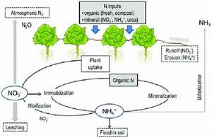 Simple Diagram Showing Nitrogen Cycle