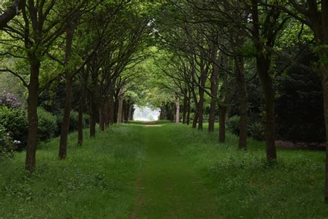 tree lined avenue rw gardens