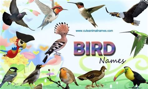 bird names cute animal names