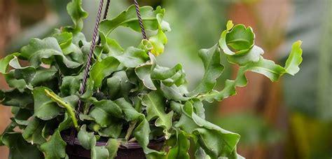 pin  charlielous  plant orchid cactus plants cactus