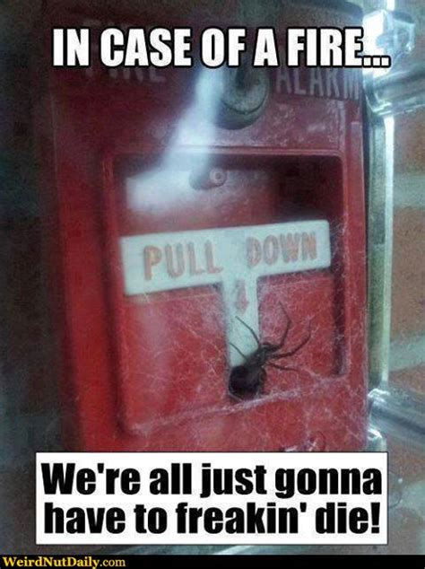 Spider Fire Alarm Meme - funny pictures weirdnutdaily spider of the fire alarm