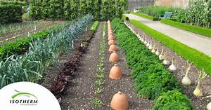 How To Start A Veggie Garden In South Africa ISOTHERM