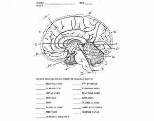 parts of the brain original test purposegames With brain wiring test