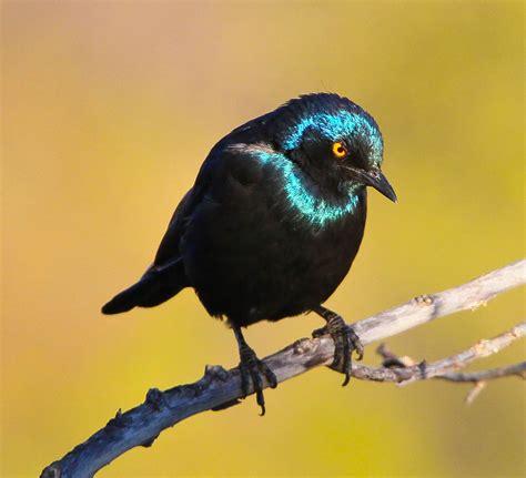 ohio birds and biodiversity december 2011