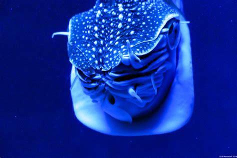 l aquarium de malo le grand aquarium de malo evasionmer