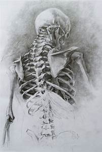 17 best ideas about Skeleton Drawings on Pinterest ...