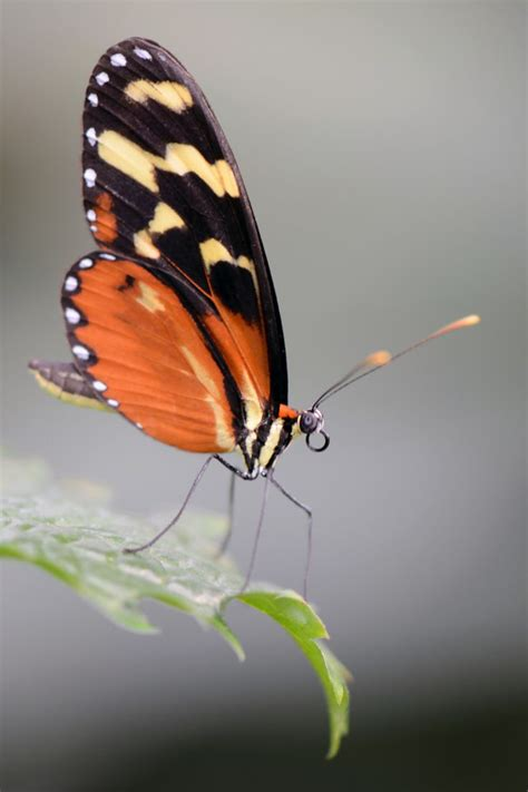 butterflies ladybugs   images